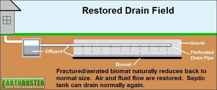 Restored Drain Field